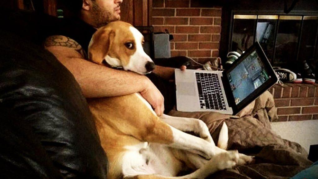 Я тебя ревную: забавная фотоподборка, которая показывает, что животные могут ревновать не хуже людей