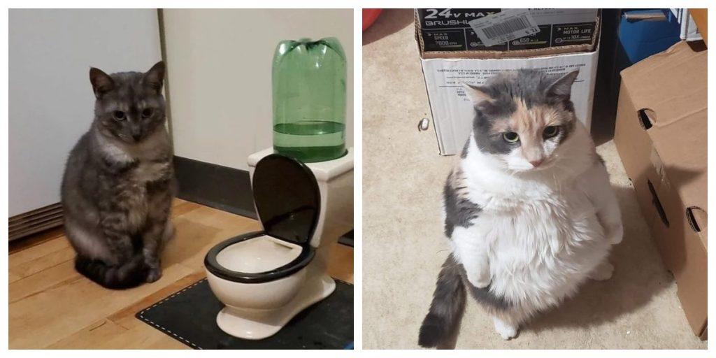 Наглые мордочки: подборка фотографий, показывающих забавные ситуации с котами