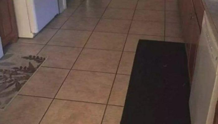 Тест на внимательность: на фото есть собака, но найти ее без подсказки удается не всем