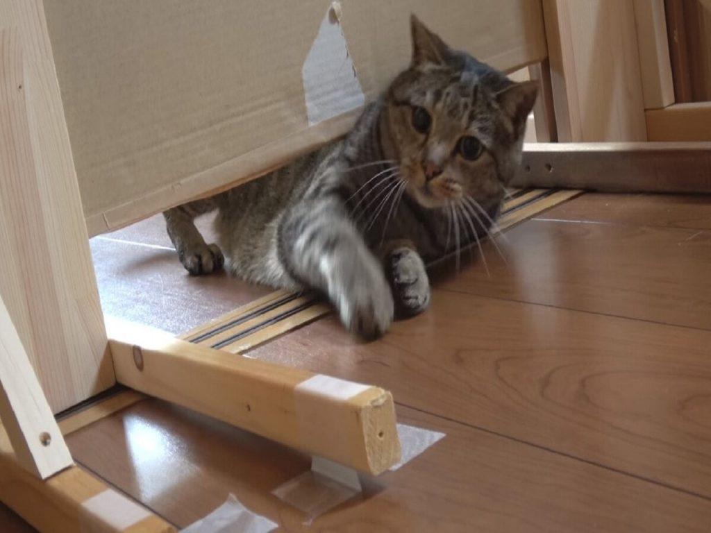 Почему кошки могут «просочиться» в любую щель?