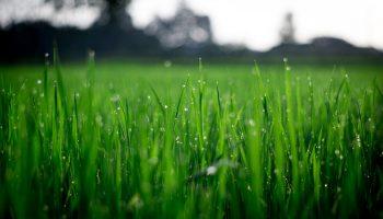 Цветотерапия: зеленый, как эквивалент гармонии в нашем мире