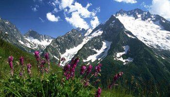 Неожиданное открытие: в крайне суровых условиях на высоте 6 км найдена растительность