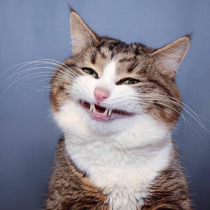 Топ-5 смешных котов, которых застукали их хозяева