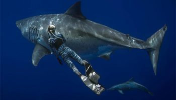 «Голубая бездна»: исследователи сделали фото одной из наиболее крупных белых акул в истории