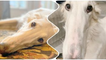 «С таким носом?»: собака с невероятно длинной мордочкой, очаровала социальные сети