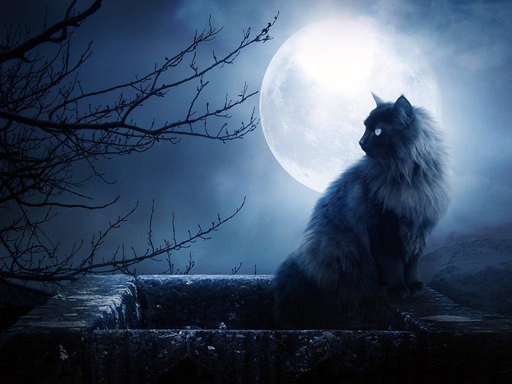 Домашние лекари: как кошки нейтрализуют негативную энергию
