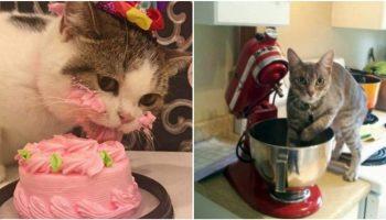 Проделки животных, которые остались одни дома: 16 курьезных фото
