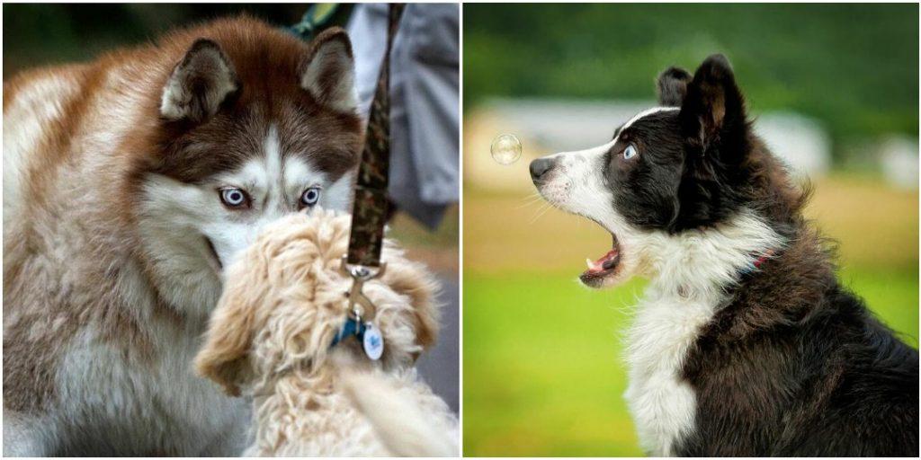 «А ну-ка, рассмеши»: 20 фото с конкурса смешных фотографий домашних животных «Comedy Photo Awards»