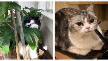 Пушистые наглецы: подборка фотографий забавных ситуаций с котиками