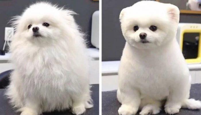 Неузнаваемые питомцы после стрижки: 14 фото до и после