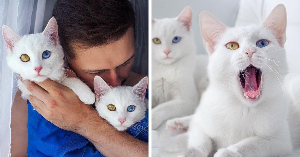 Питерское чудо: мужчина выбрал для себя двух кошечек-близняшек, которые теперь стали популярными в Интернете