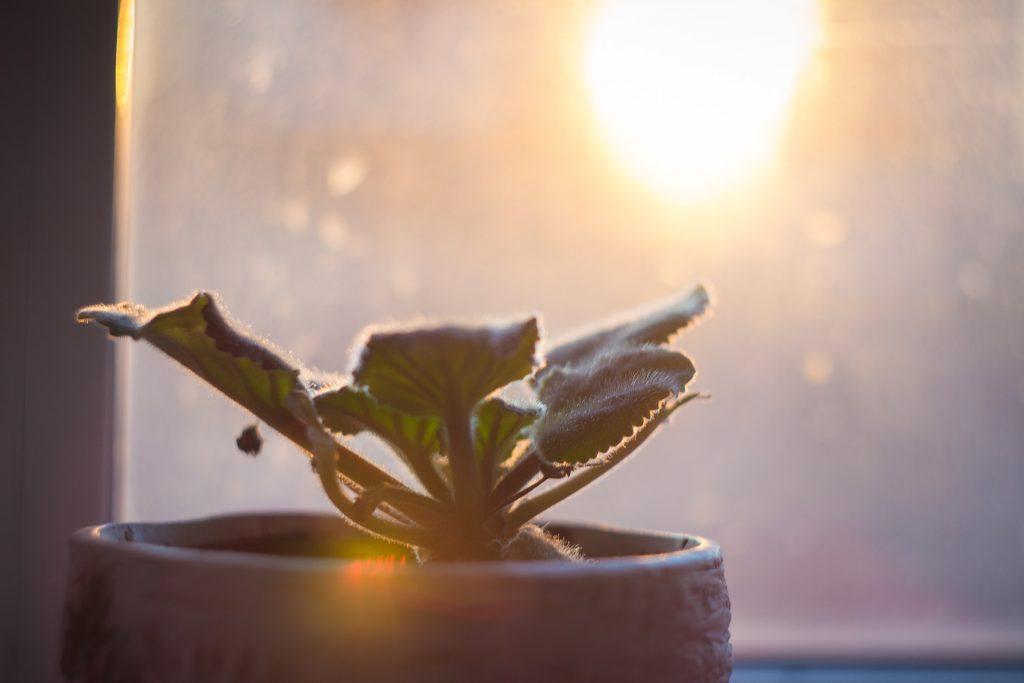 Зеленые магниты любви: растения, помогающие наладить личную жизнь