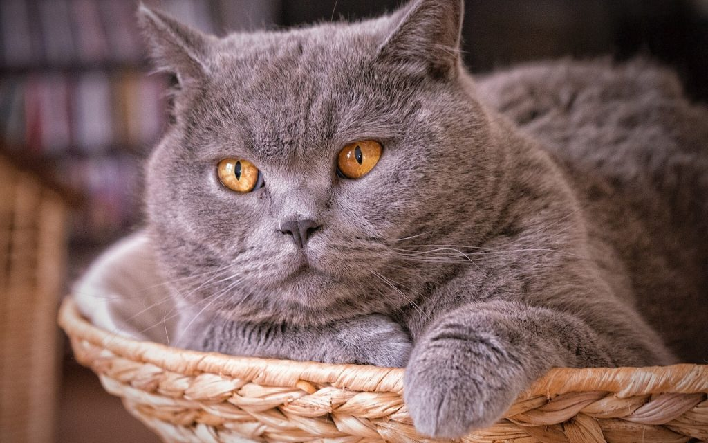 Кошки – это кошки: 12 полезных фактов о наших любимых пушистиках