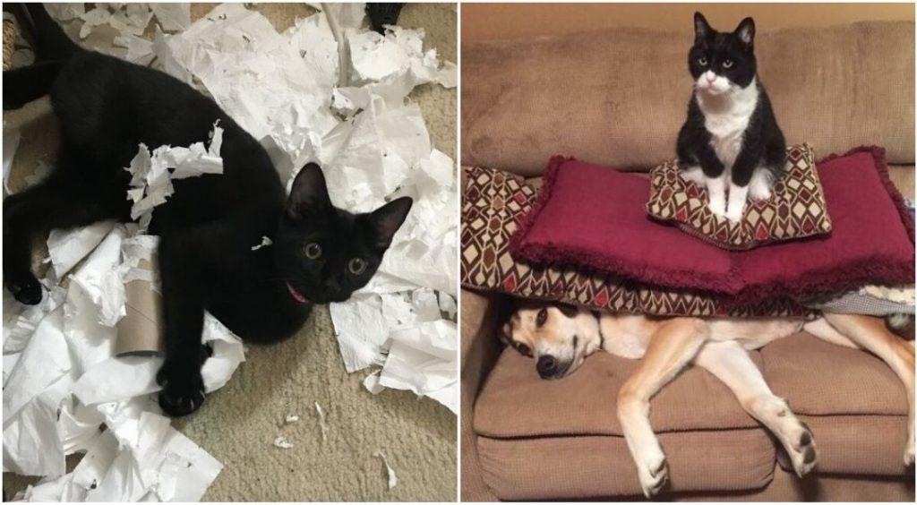 «Я ни в чем не виноват»: 16 фото кошек, которые любят шкодить