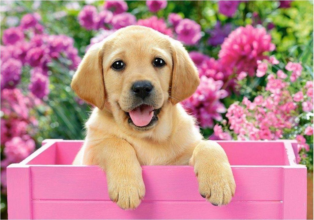 Друг человека: 10 советов тем, кто завел щенка
