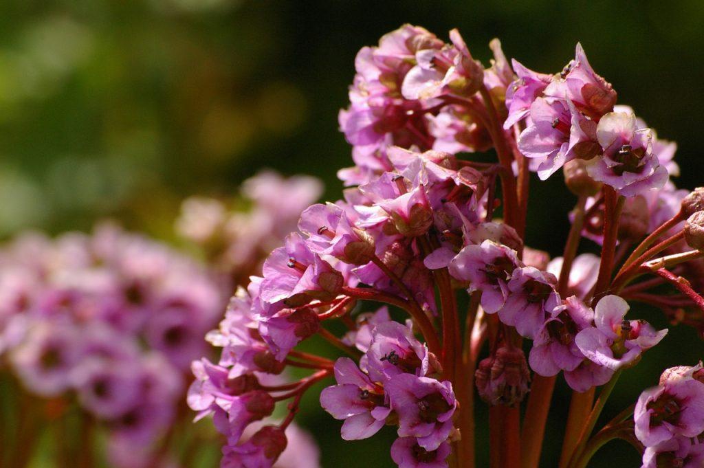Посадили и забыли: подборка неприхотливых растений для сада