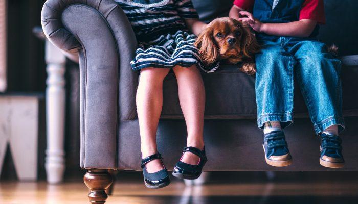 Домашний питомец: как узнать, что ребенок готов ухаживать за кошкой или собакой
