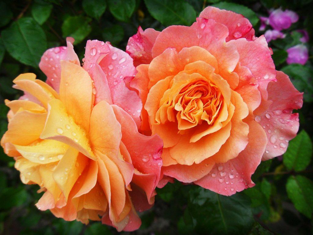 Тест-картинка: выберите цветок и узнайте, что вас ждет в следующие 7 дней
