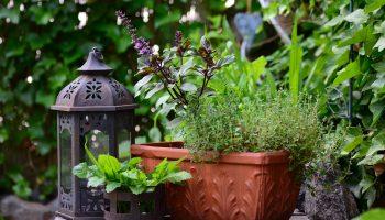 Полезное садоводство: 8 растений, отпугивающих комаров