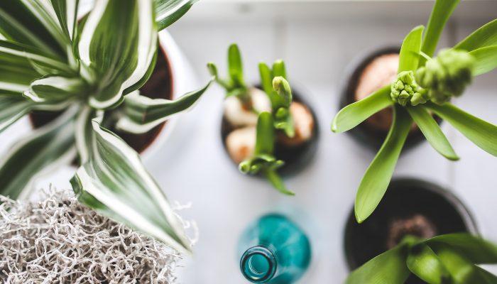 Зеленый уголок: 3 самых популярных комнатных растения 2020 года по версии Trader Joe's
