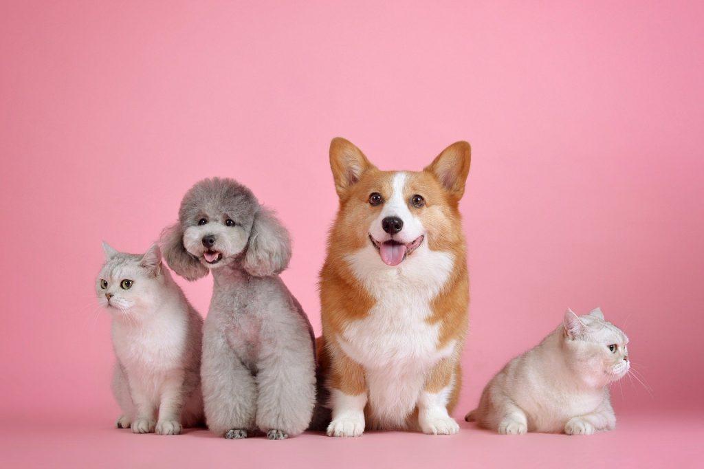 Экспертное мнение: 3 распространенных вопроса об этикете домашних животных
