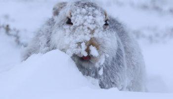 Невероятные погодные рекорды: 2 метра снега, ледяной дождь, резкие перепады температуры